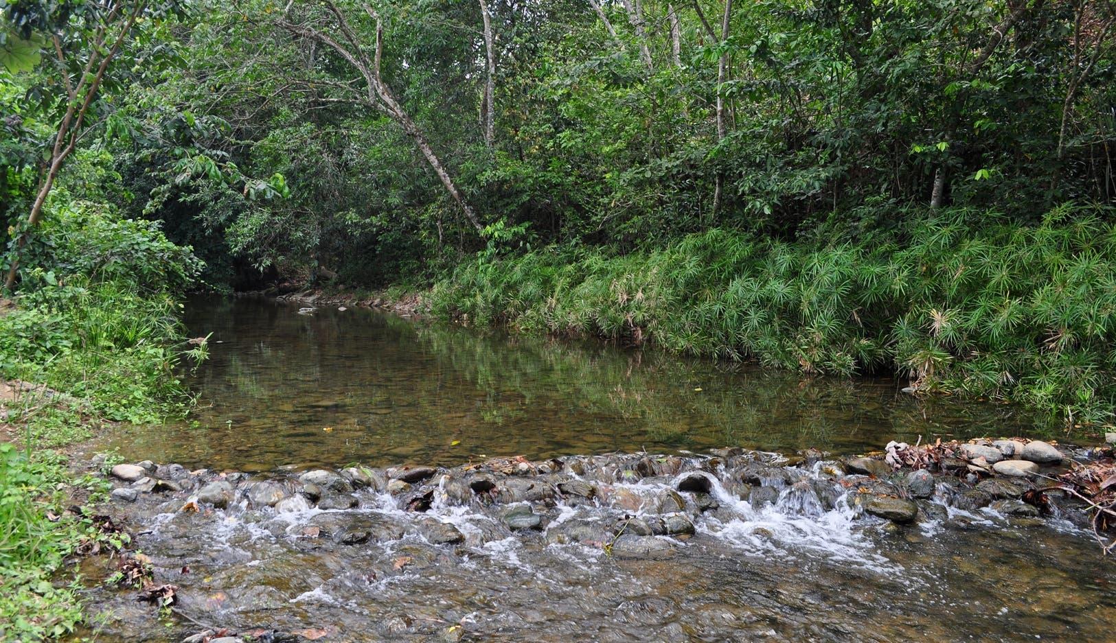 Presidente Abinader crea el Parque Nacional Loma los Siete Picos