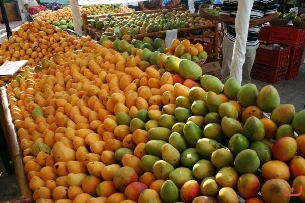Buscan convertir el cultivo de mango en un negocio altamente rentable en R.D.