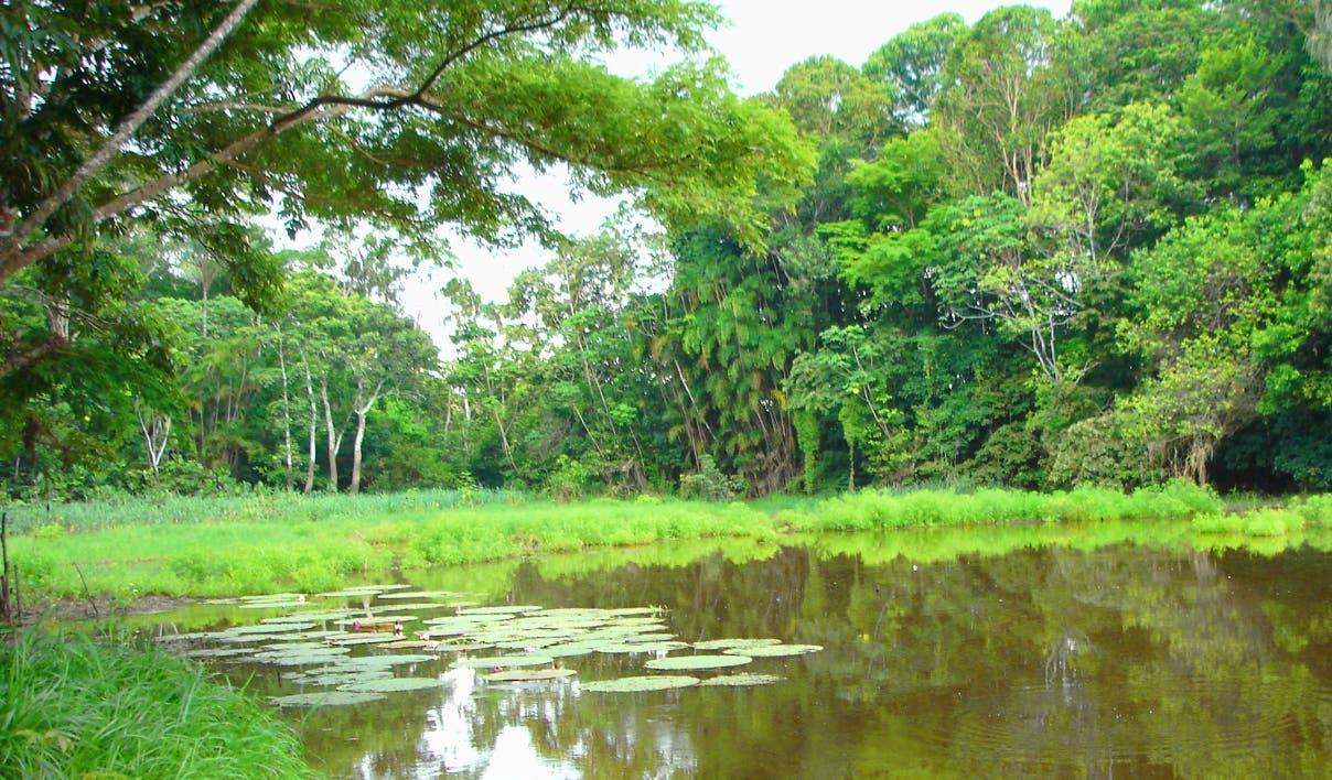 Cambio climático está reduciendo capacidad de los bosques de absorber metano
