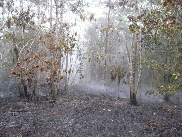 Area afectada por incendio en Loma Miranda