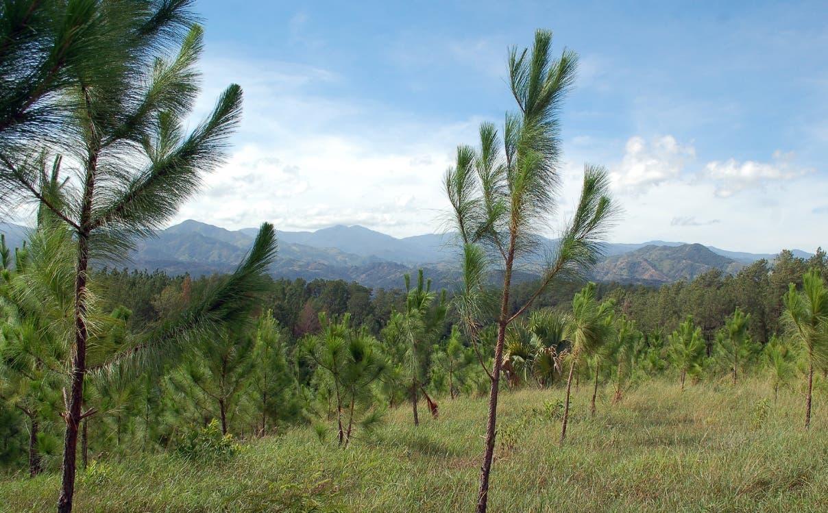 RD podría potenciar bosques