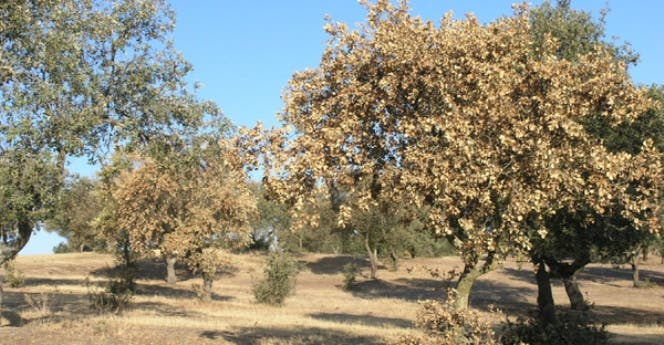 arboles-afectados-por-seca2