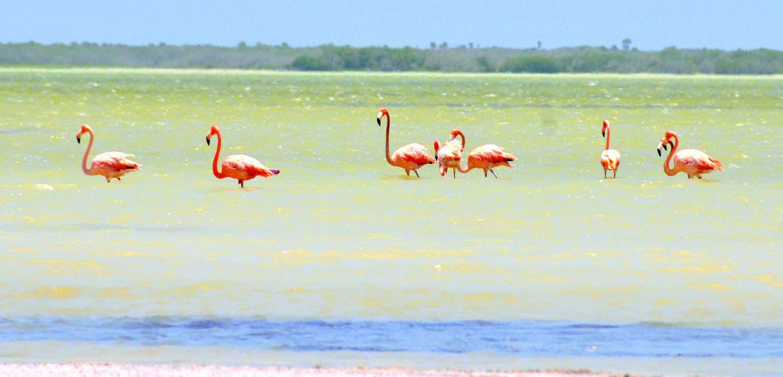 Laguna de Oviedo, lugar por excelencia para observar aves