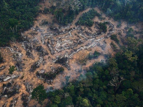 La deforestación amenaza mitad de las especies de árboles en la Amazonía