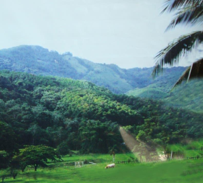 RD posee  condición producción bosques