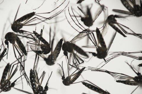 temor zika