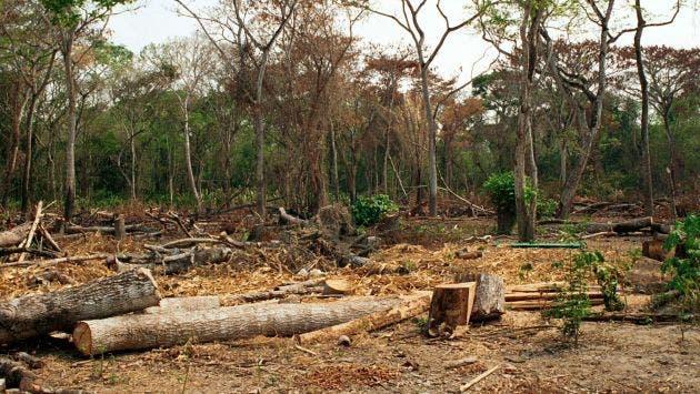 Cada año se pierden siete millones de hectáreas de bosque tropical, dice FAO