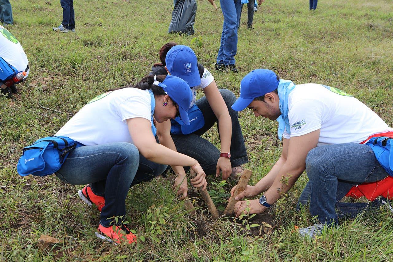 Grupo Popular siembran más de 6 mil árboles en jornadas de reforestación