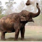 marruecos-elefante-lanza-piedr-jpg_604x330