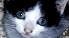 SEGUNDA.-Gato. Foto/ Amelia Mendez