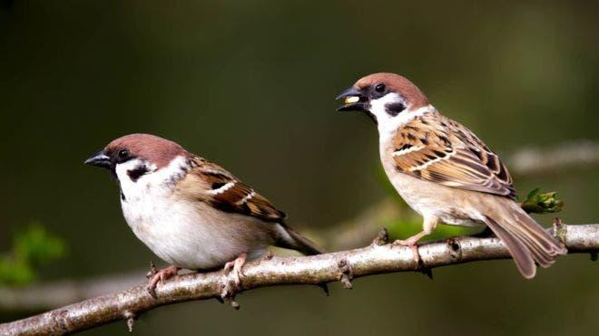 Las aves cerca de tu casa pueden mejorar tu salud mental