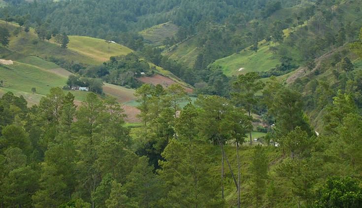 Día Mundial de la Forestación: Cuidemos los bosques