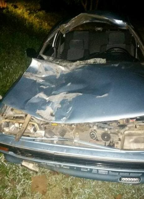 caballo-causa-accidente-en-carretera-puertoplata-montellano-autoridades-apresan-animales-animales-realengos-i-1