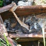 desconocidos-profanan-tumba-y-roban-cadaver-en-cementerio-comunidad-de-puerto-plata