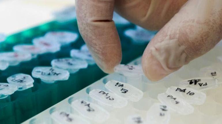 desarrollan-estrategia-inmunoterapia-nanoparticulas-biodegradables_1018109599_126771961_667x375