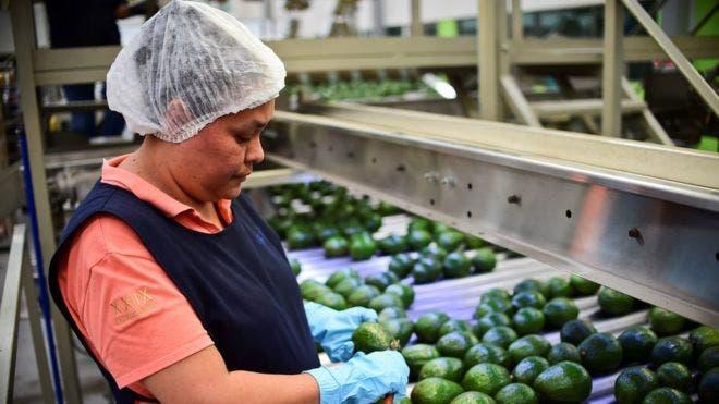 Las exportaciones latinoamericanas de aguacate hacia China aumentan a un ritmo del 250% anual.