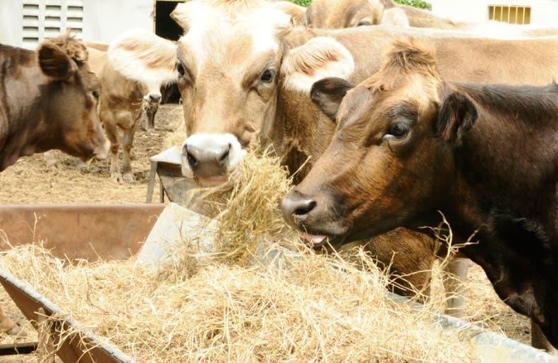 El sector lechero pide al Gobierno parar la competencia desleal.