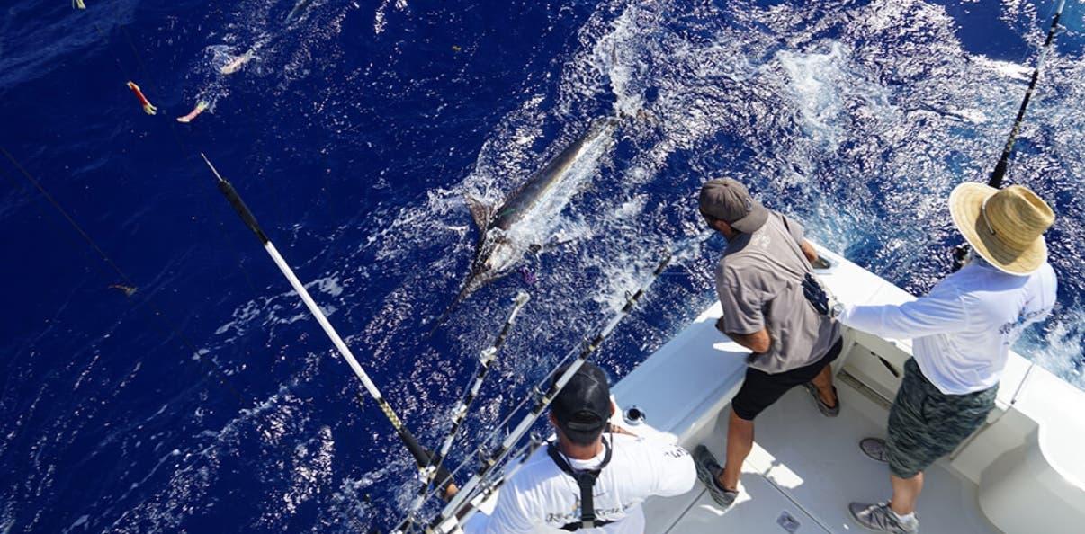 Batallar por abordar un Marlin forma parte de lo cotidiano para los profesionales de este deporte.