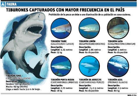 Veda a tiburón busca preservar población