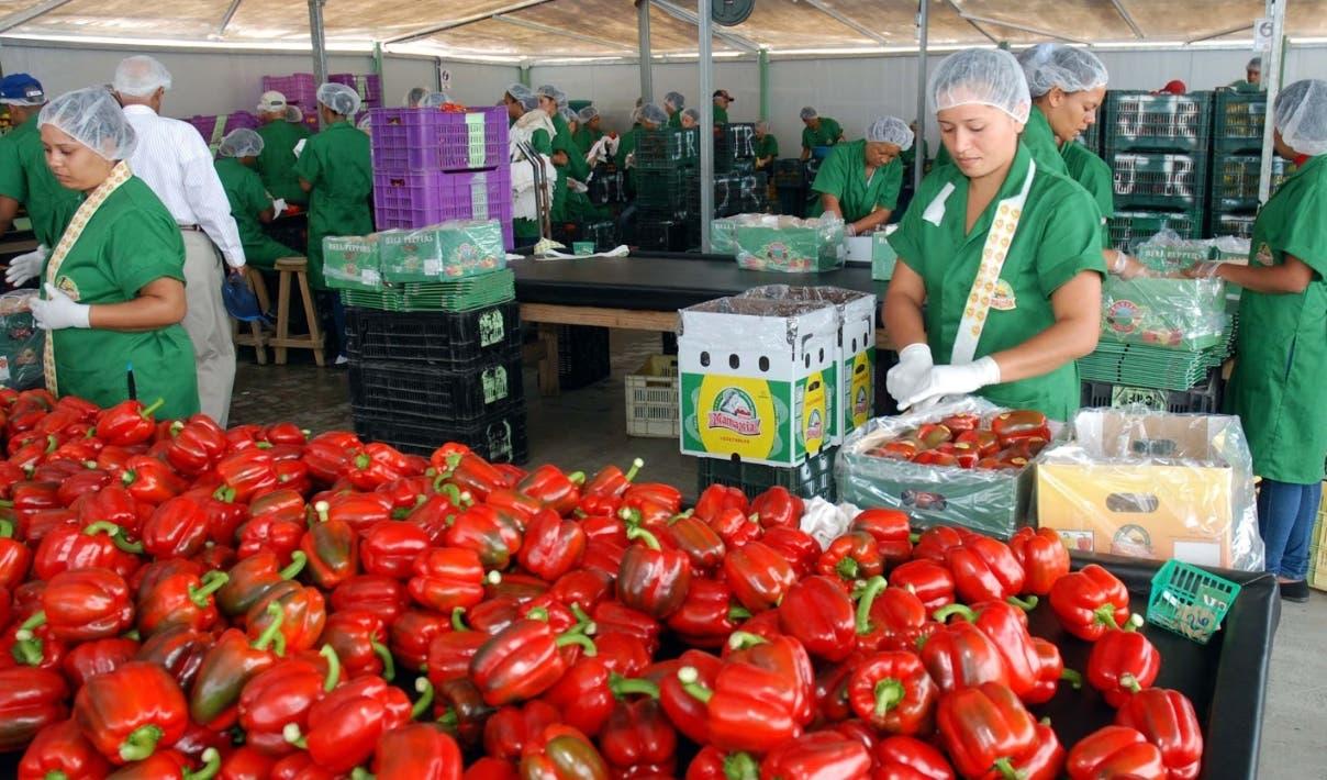 La verduras son algunos de los productos que exporta el país, al igual que mangos y otros rubros.