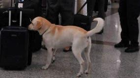 imagen_perro-en-el-aeropuerto