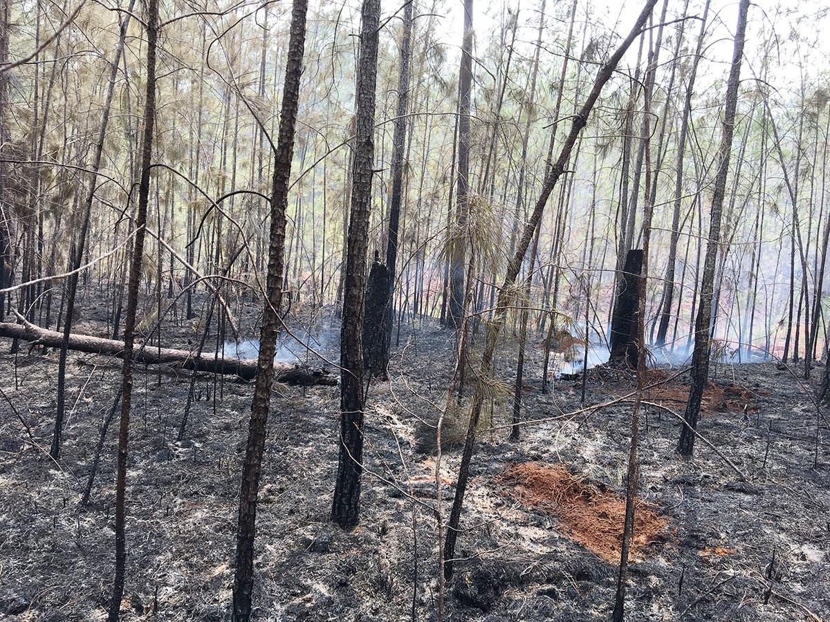 Controlan incendio que afectó bosques en la Sierra de Bahoruco