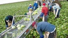 Miles de inmigrantes indocumentados realizan labores agrícolas en Estados Unidos.