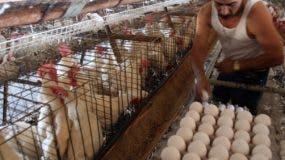Consumo per cápita en  2002 era de 128 huevos en el país y ahora asciende a 168.