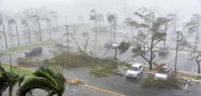 Los árboles son derribados en un estacionamiento en el Coliseo Roberto Clemente en San Juan, Puerto Rico.