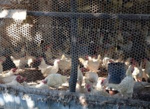 Productores de diversas granjas toman medidas adicionales.