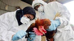 El control de la enfermedad en los animales es fundamental para reducir el riesgo para el ser humano.