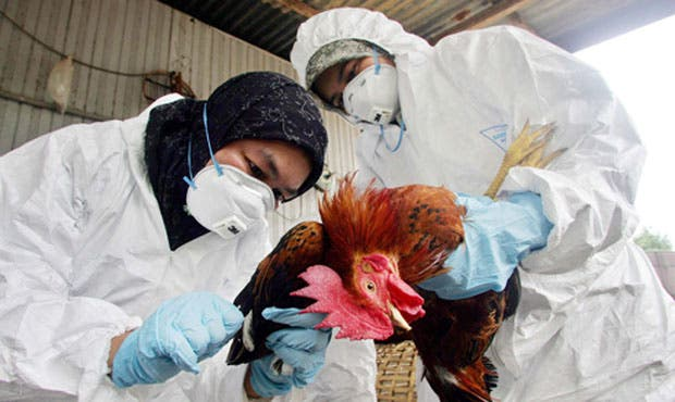 Virus de la gripe aviar, una enfermedad infecciosa