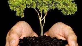 silueta-reforestacionp01