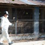 Los afectados son productores de huevo de Cayetano Germosén.