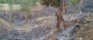 La quema y corte indiscriminado contribuye a desaparecer los bosques y con esto  se pierde el agua.