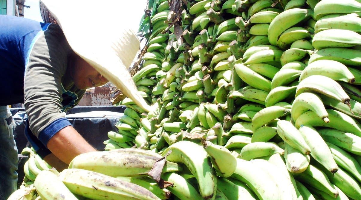 Alza precio plátanos alarma consumidores