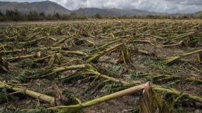 destruccion-plantaciones-puerto-rico