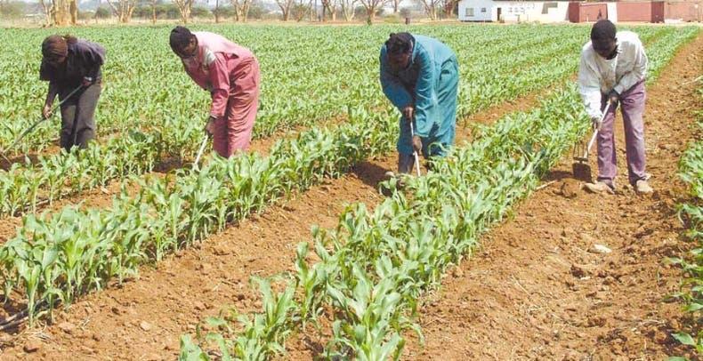 Autoridades acuden en la protección e incentivos de productores.