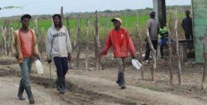 La agricultura y crianza de animales es la principal actividad a la que se dedican los inmigrantes.