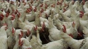 Unas  20 mil toneladas de  cortes de carnes se importarán.