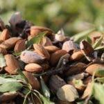 Ricas en ácidos grasos monoinsaturados, las almendras son uno de los alimentos más saludables.
