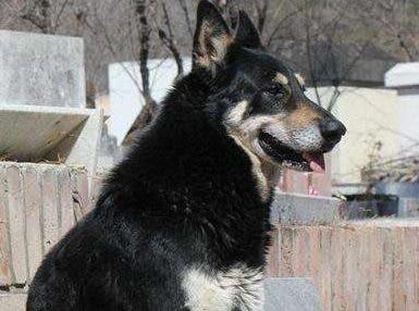 El perro por años se convirtió en una figura emblemática.