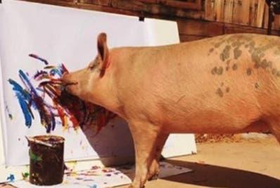 El animal fue rescatado de un matadero en Sudáfrica.