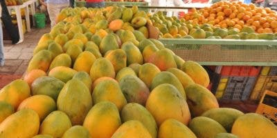 El mango de Baní es el más exportado.  ARCHIVO