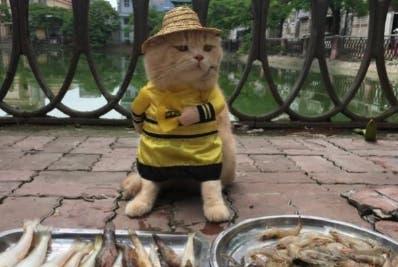Dog ya es toda una celebridad en  Vietnam.