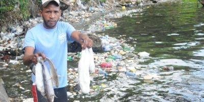 Derrame de químicos mata peces.  Nicolás Monegro.