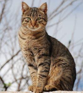 silueta-gato-2p01