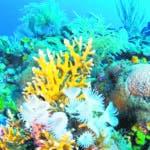 Los corales cumplen con dos grandes funciones, que son el mantenimiento de las playas y generando arenas blancas.  Archivo