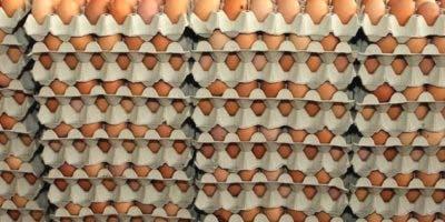 dominicanos-en-ny-dejan-de-comprar-huevos