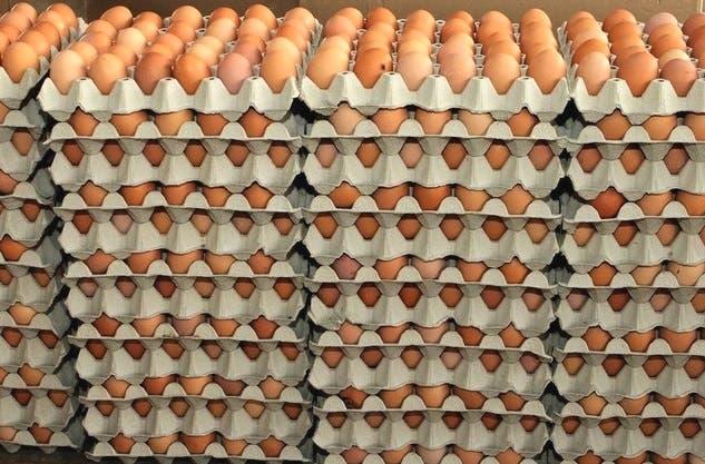 Resultado de imagen para Dominicanos en NY dejan de comprar huevos